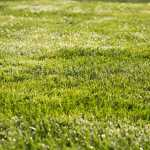 Why lawn care is important! 4 Tips for Greener Grass