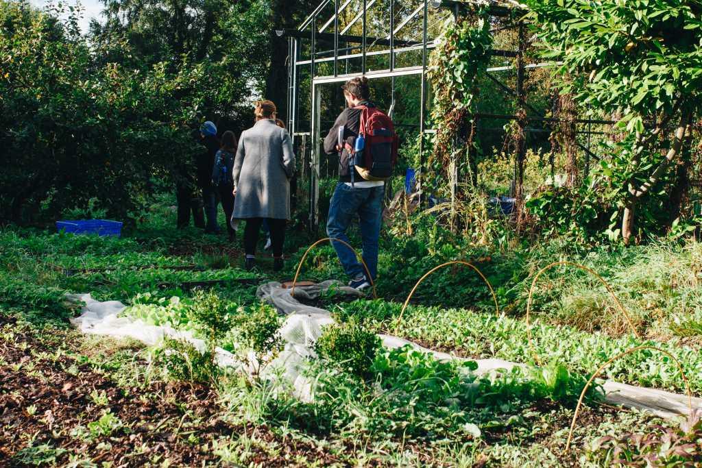 gardening & garden maintenance